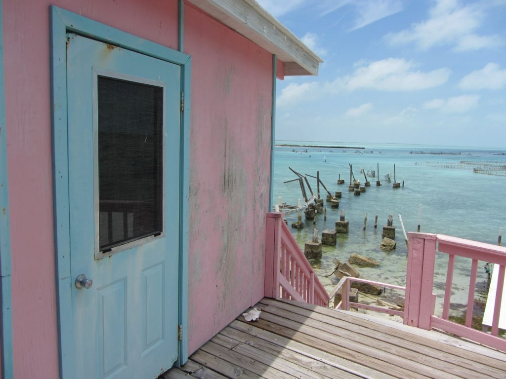 A cool pic of the conch farm