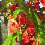 Flowers of Barths II