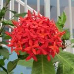 Flowers of Barths VII