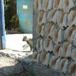 Close up of cat and conch wall.