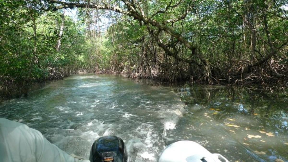 MangroveCreek