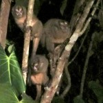 Al Natural Resort 1: Here are the monkeys looking for bananas at the El Natural resort.