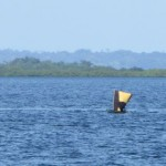 Drifting around Dolphin Bay 5: Just like Kuna Yala, the native Indians put sails on their dugout canoes.