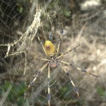 The biggest spider that I ever did see.