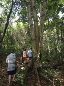 Our trail through the forest. Walking around the huge almond tree.