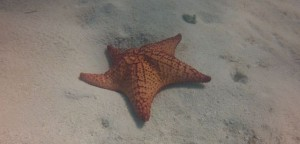 Starfish on the run.