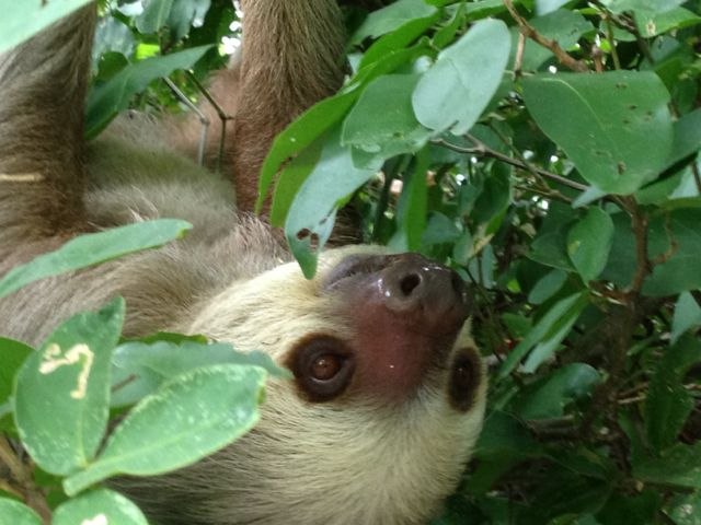 The best sloth picture yet!