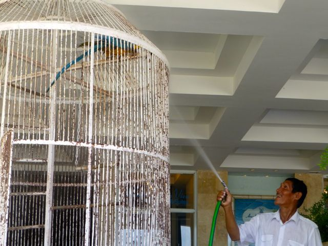 The parrot gets a shower.